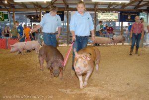 hog showing