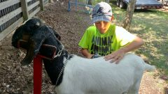 Colton-Leibond-Goat