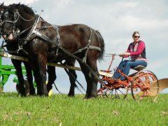 plowday-horsepower