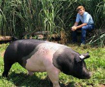 auction-hog